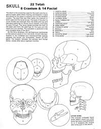 axial and appendicular skeleton coloring pages sketch page in