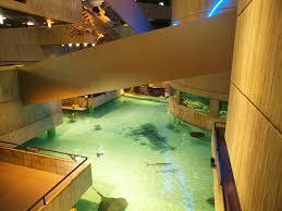 baby nursery splendid good aquarium floor home design ideas