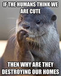 Otter Memes - th id oip dbu i1we9huy87kyafzmrghajq