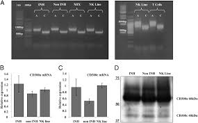 whats included in 96u expression and function of cd300 in nk cells the journal of