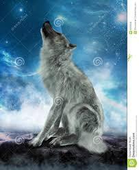 white wolf howling moon illustration stock photo image 62009538