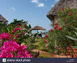 zanzibar island africa hotel resort tourism holiday vacation coast