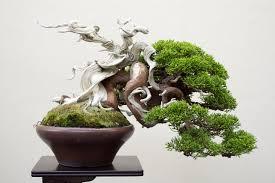 small trees at their best shohin bonsai on display at the 2017 wbc