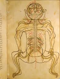 Human Body Chest Anatomy Islamic Medical Manuscripts In The Nlm Ms P 19