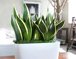 Best Plants For Bathrooms 10 Best Plants That Will Thrive In Your Bathroom