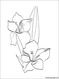 gladiolus coloring print coloring pages