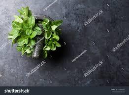 Table Top Herb Garden Fresh Mint Leaves Mortar On Stone Stock Photo 417379099 Shutterstock