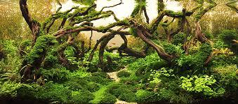 Java Moss Aquascape Aquarium Moss Tree Images Reverse Search