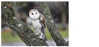 Ohio wildlife tours images Home ohio wildlife center jpg