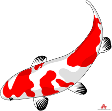 red and white koi fish free clipart design download