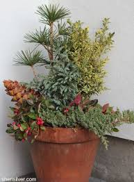 Plants For Winter Window Boxes - winter window boxes and planters sheri silver living a well