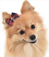 hair bows for susan lanci hair bows for small dogs g w