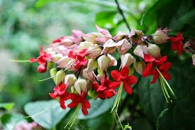 100 sri lankan flower flowers in sri lanka stock photo