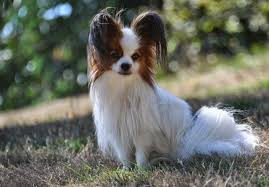top ten contestants for the cutest dog in the world urdogs