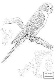 coloring pages for kids birds funny parrot on a branch abcfunkids me