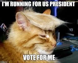 Vote For Me Meme - donald trump cat imgflip