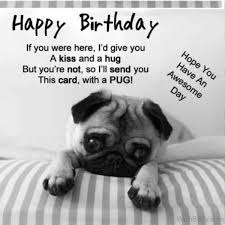 Happy Birthday Pug Meme - 64 dog birthday wishes