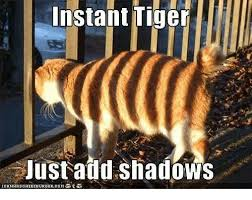 Instant Meme Maker - instant tiger justaild shadows icanhasche ez eurger co m meme on