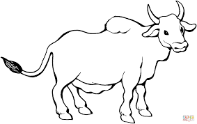 zebu coloring page free printable coloring pages