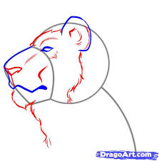 how to draw a lion face step by step safari animals animals