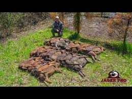 Hog Hunting Memes - jager pro hog trapping 13 40 40 strategy 100 success videos