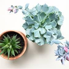 Types Of Indoor Plants Low Maintenance Indoor Plants U2013 Aloe U0026 Aster
