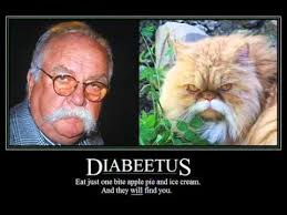 diabeetus cat meme cat best of the funny meme