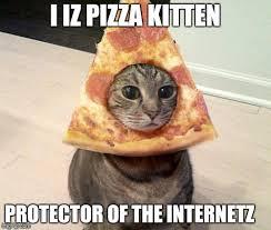 Cat Meme Pictures - pizza cat imgflip