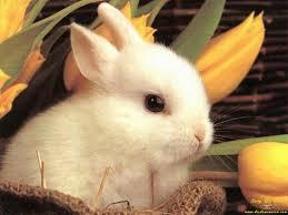 bunnies for easter easterbunny jpg