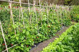 the beautiful vegetable garden ideas with the vegetable garden