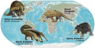 darwin evidence continental distribution