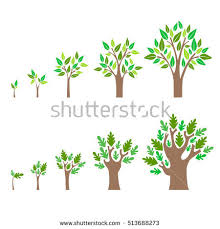 growing tree stock images royalty free images vectors