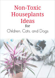 non toxic house plants for children cats and dogs dengarden