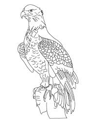 national bird bald eagle coloring page download free national