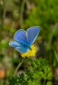 butterfly blue summer insect nature beautiful wildlife open