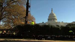 capitol tree from montana arrives in washington d c