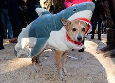 Shark Costume Halloween Halloween Shark Dog Costume Don U0027t Worry Bark Bigger