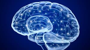 Brain Mapping Study Shows Different Brain Cells Process Positive Negative