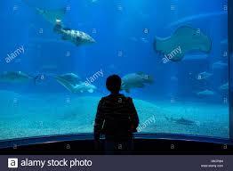 whale shark sharks fish stingrays sea animals swimming in