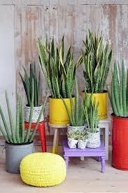 houseplants that need little light house plants that need little light
