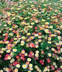 22 best flowers images on pinterest flower seeds garden seeds