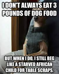 Dog Food Meme - how to train a dog with separation anxiety how to stop your dog