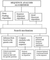 Meme Motif - a comparative analysis of motif discovery algorithms science
