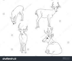 illustration buck doe deer stock vector 90922634 shutterstock