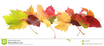 banner colorful autumn fall leaves stock photo image 44406169