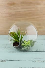 terrarium globe 7in