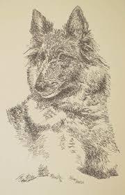 belgian sheepdog of america 26 best belgian tervuren dog art portraits photographs