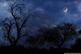 gazing at stars