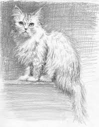 20 best cat drawings images on pinterest cat drawing cat art