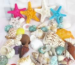 Assorted Seashells 500g Lot Assorted Seashells Animals Tropical Beach Mix Sea Conch